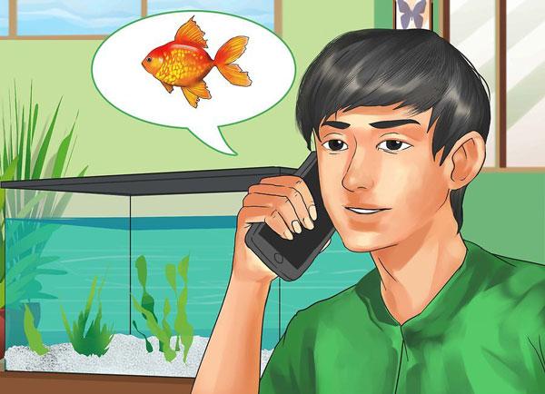 انتخاب ماهی مناسب آکواریوم