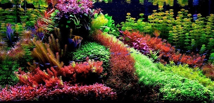 انواع سبک های آکواریوم گیاهی | سبک هلندی