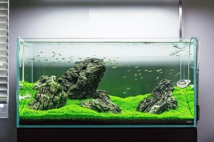 انواع سبک های آکواریوم گیاهی | سبک ایواگومی