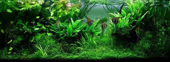 انواع سبک های آکواریوم گیاهی | سبک جنگلی